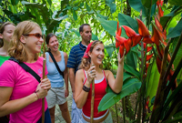 eco tours in jungle