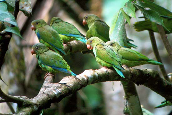 ecotourism in Costa Rica helps communities