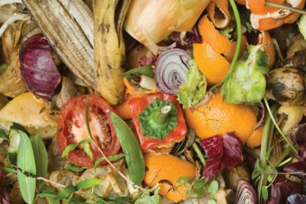 tips on cutting down on food waste