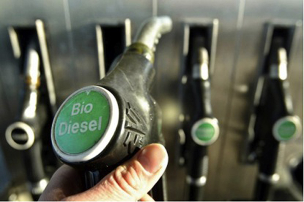 Biodiesel production for sustainable transport
