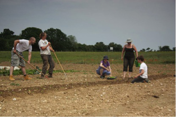How community supported agriculture helps organic farmers
