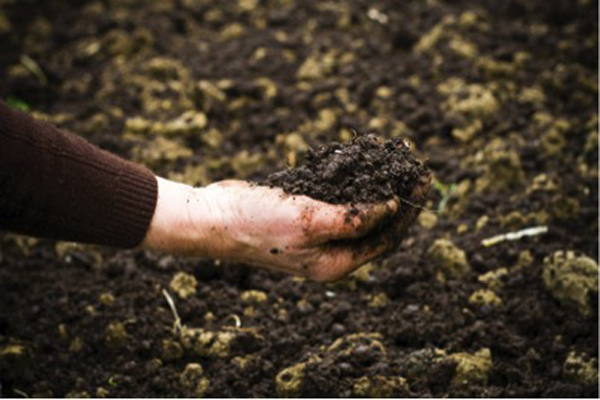 Organic food production improves soil