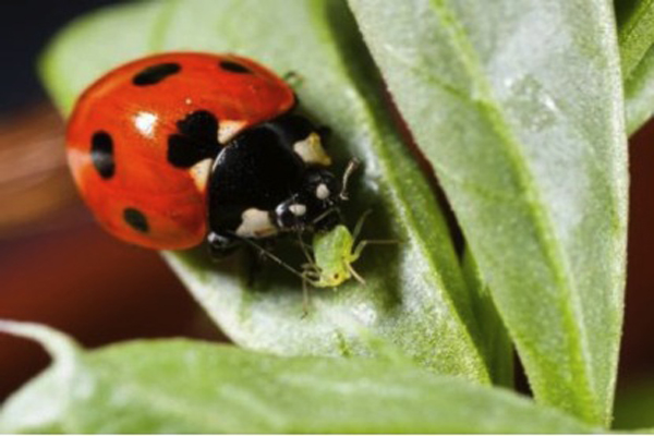 Integrated pest management with natural predators
