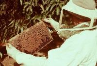 getting started beekeeping
