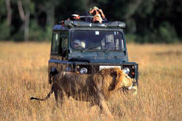 impacts of wildlife tourism on animals