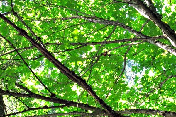 shadytree
