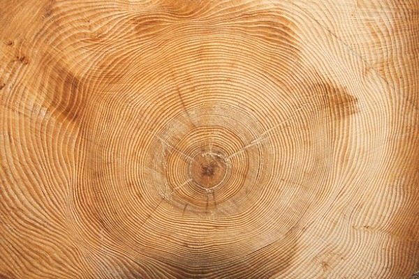 treegrain
