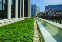Turf on an intensive green roof