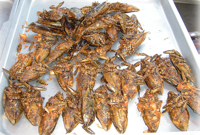 eating insects