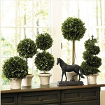 indoor boxwood The 5 best indoor plants for your home